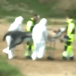 Watch Bizarre Video Showing Merman Pulled From Lake By Men In BIOHAZARD Suits