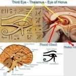 ONE OF THE BIGGEST SECRETS KEPT FROM HUMANITY: THE PINEAL GLAND