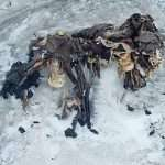 Melting Glacier Exposes the Grisly Corpses of a Century-Old Battle