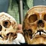 Mysterious 'hobbits' found on Flores island are not homo sapiens