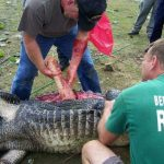 Zoo Employee Was Having Intercourse With An Animal And Then An Aligator Joined Them…OMG!