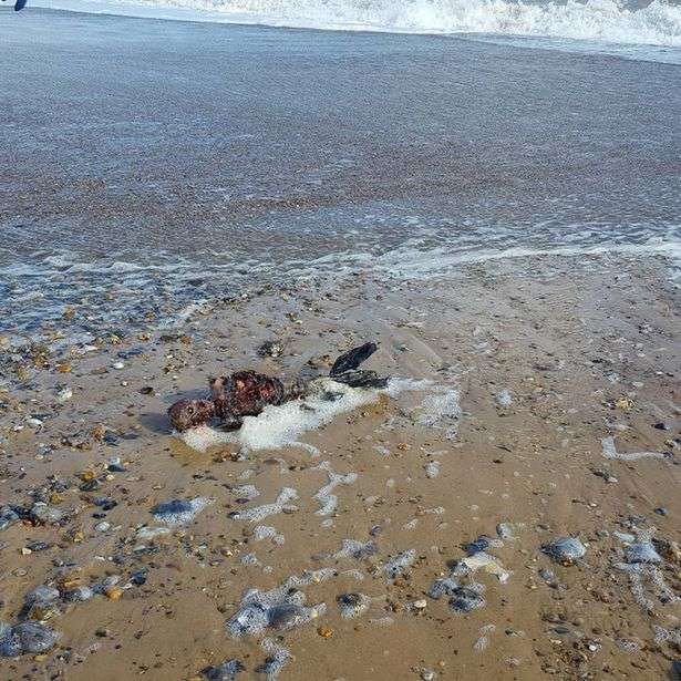 Mystery Over Rotting Body Of Dead Mermaid After Gruesome