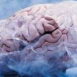 Australians freezing brains to achieve immortality
