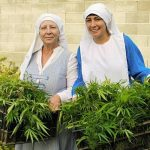 """Narco Nuns: Sisters Make Oil And Soap From Cannabis Believing It Is A """"Gift From God"""""""