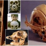 FOUND INSIDE VATICAN VAULT: Skulls Of UNKNOWN Creatures!