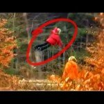 Levitating Girl In Russian Forest