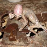 Farmers Found Something Bizarre In a Trap In Mexico That Mystified The Whole World
