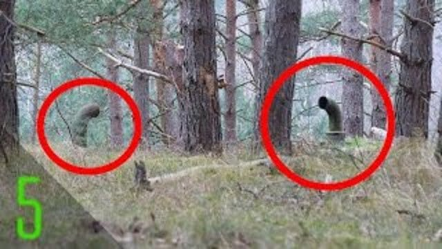 Creepiest Things Found in the Woods