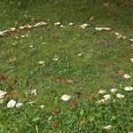 DO YOU DARE ENTER A FAIRY RING? THE MYSTICAL MUSHROOM PORTALS OF THE SUPERNATURAL