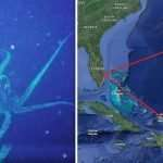 Bermuda Triangle: Why 'startling discovery of 30-foot creature could explain lost ships'
